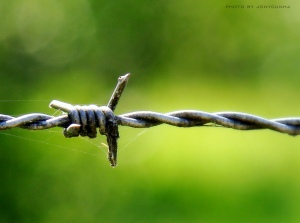 a piece of barbed wire against a blurry green background, with small, thin strands of fine spider webbing holding on to the prongs.
